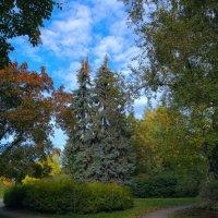 В парке :: Sergey Sergeev