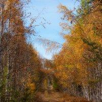 Осенняя дорога :: Дмитрий Смирнов