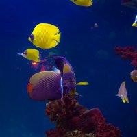 подводный мир.. :: Viktor Nogovitsin