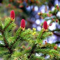 весеннии цветы тайги :: Евгений Фролов