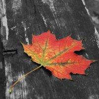 Осеннее настроение :: Анастасия Есина