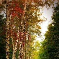 Осенний пейзаж :: Анна Anuta