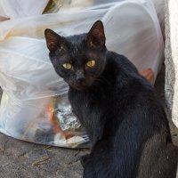 Про кота :: Наталия Крыжановская