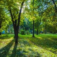 Осенний парк. :: Павел Данилевский