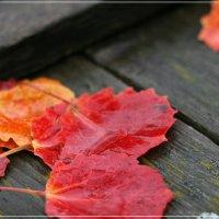 Осеннее... :: Маргарита