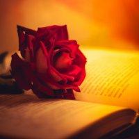 Роза :: Денис Ведь