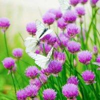 Бабочки :: Татьяна Виноградова