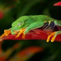 Спят усталые лягушки :: Ирина Козорог