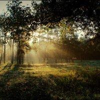 Рассветный лес :: Анна Anuta