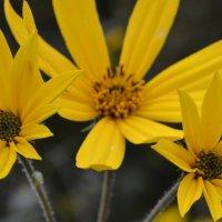 цветы :: олеся
