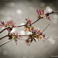 Весна :: Сергей Гаварос