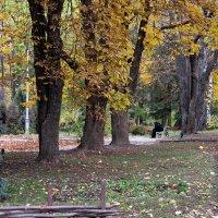 Осенний мотив :: Виталий Максютенко