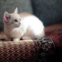 Котенок на солнце. :: Алексей Хаустов