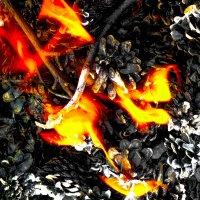 Магия огня :: Дарья Ашарина