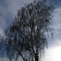 дерево :: андрей громов