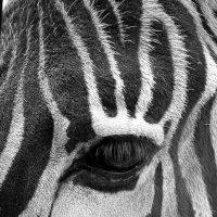 черно-белый :: Константин Сегеда
