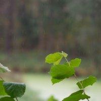 погода :: Nina Zhafirova