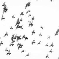 Голуби :: Екатерина Рудник