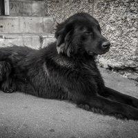 le chien :: Степан Бормотин