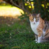 Кошка :: Егор Прокофьев