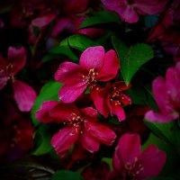 краски весны :: Александр Шурпаков