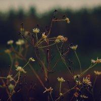 Цветы осени :: Сергей Дубинин