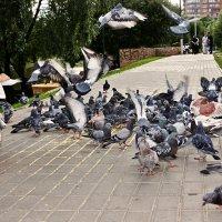 В парке :: Margarita Shrayner