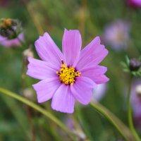 Цветок :: Олег Дубницкий