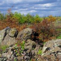 И  на камнях растут деревья :: АНДРЕЙ федорцов