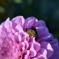 Пчелка ... :: Светлана
