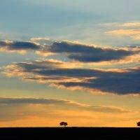Три дерева... :: Олег Куцкий