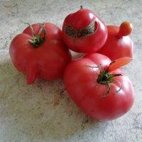 ПРИВЕТИК от Смешных помидорок :: ТАМАРА