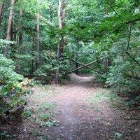 Загадочный русский лес :: Gen Vel