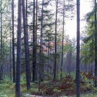 Вечер в лесу :: Арина