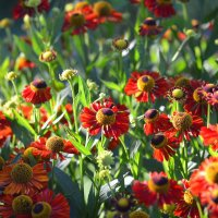 Вечер в саду :: Татьяна Лютаева