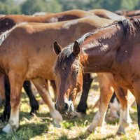 лошадки :: vladimir