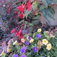 Разноцветье! :: Герович Лилия