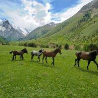 Лошади в Чегемском ущелье. :: Дмитрий Сарманов
