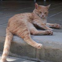 Рыжий кот не знает забот :: Gen Vel