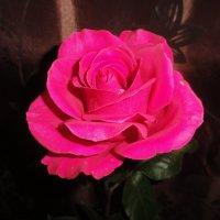 Роза :: марина ковшова