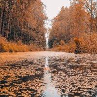 Лесные красоты. :: Виктория Писаренко