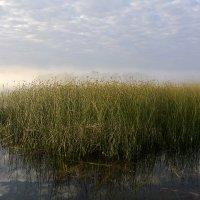 Озеро...Камыши...Туман... :: Дмитрий Петренко