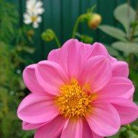 Осенний цветок :: Yulia Raspopova