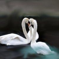 Трио белых лебедей :: Татьяна Ларионова