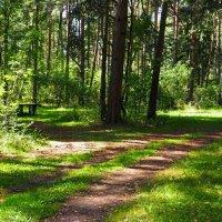 В пригородном лесу Смоленска :: Милешкин Владимир Алексеевич