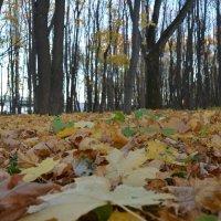 Осенний этюд :: Yulia Raspopova