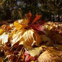 Осенние листья :: Yulia Raspopova