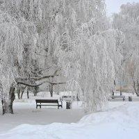 Нежная снежность :: Любовь Р