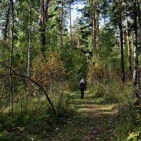 В осеннем лесу. :: Пётр Сесекин
