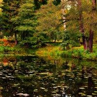 Сентябрь. Шуваловский парк :: евгения